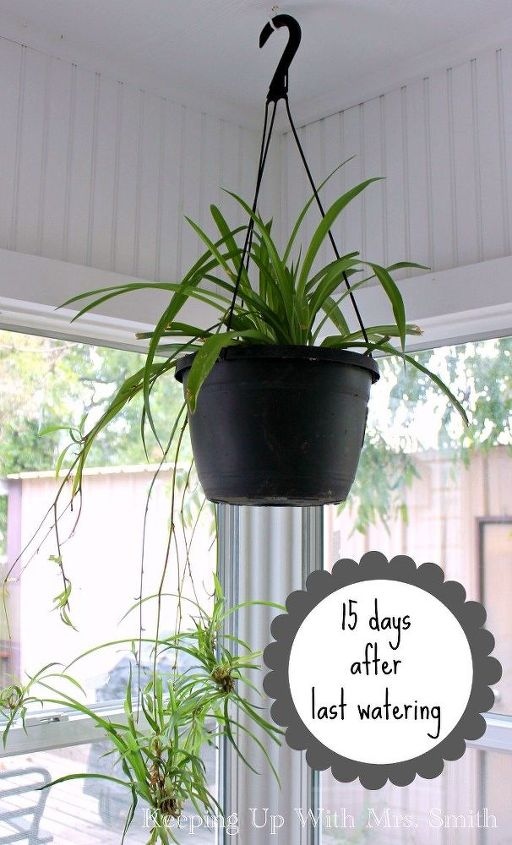 how to have lush healthy houseplants with less watering, gardening, home decor