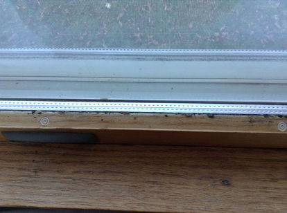 Note The Mold On Sill
