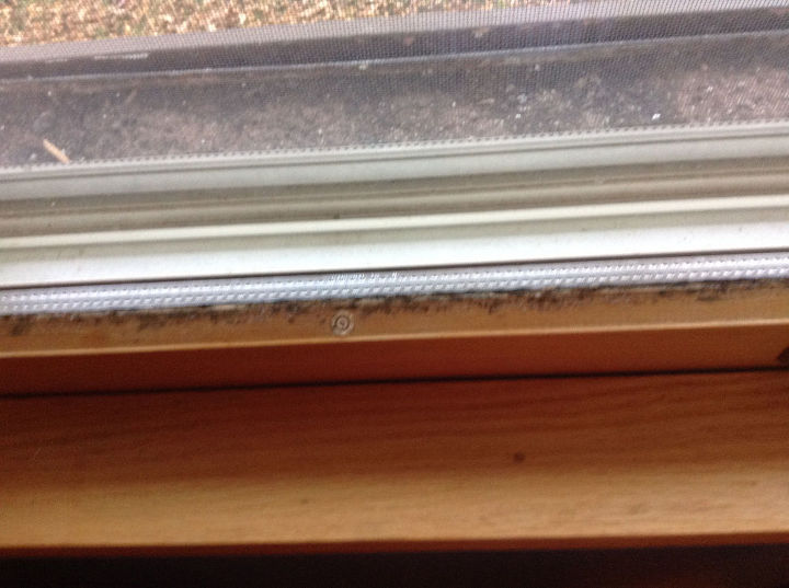 q how do i remove mold from window sashes and frames, cleaning tips, home maintenance repairs, house cleaning, windows, Same here different room