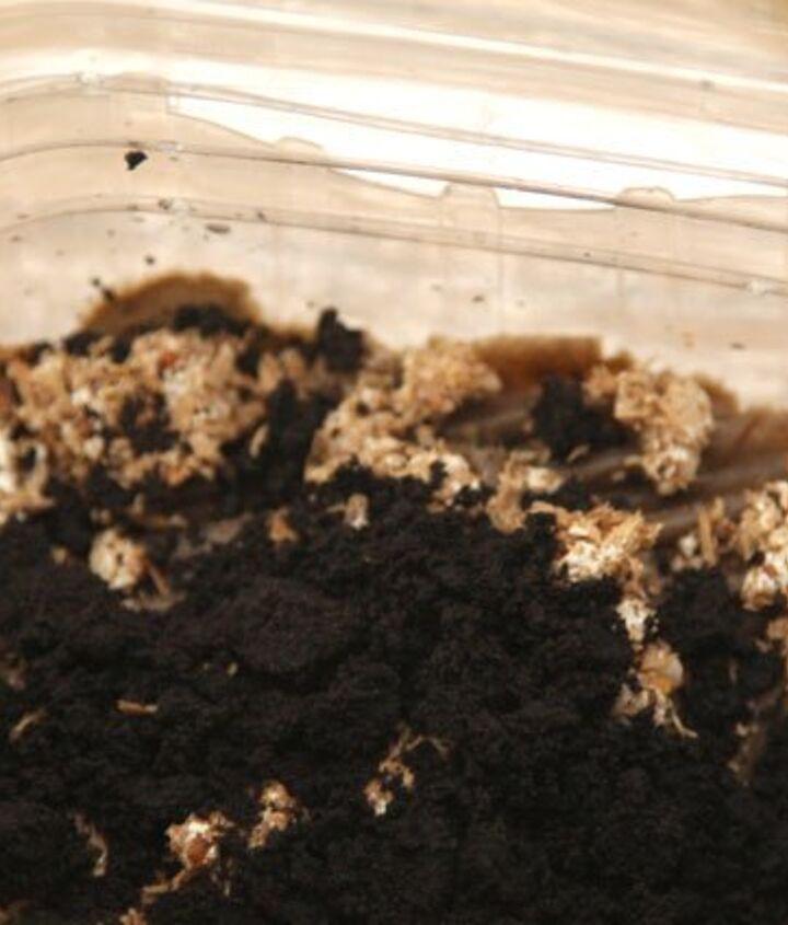 yum grow mushrooms in coffee grounds, gardening, go green