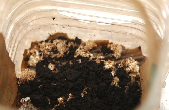 yum grow mushrooms in coffee grounds, gardening, go green