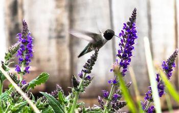 growing garden of love, flowers, gardening