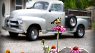 growing garden of love, flowers, gardening, My 55 Chevy great back drop for my garden of friends