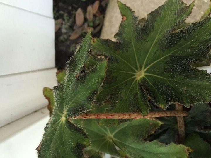 q please help identify this plant, gardening, plant id