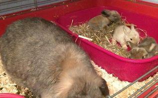 Chifferobe With Peter Rabbit Theme Hometalk