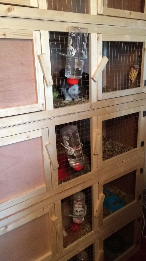 q how to kill flys with out harming my indoor rabbits, bug repellent, indoor pests, pest control, Hutches all clean keeping an eye out for flys