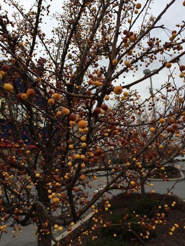 q tree identification, gardening, plant id