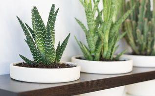 make a hanging indoor garden, container gardening, flowers, gardening, how to, succulents