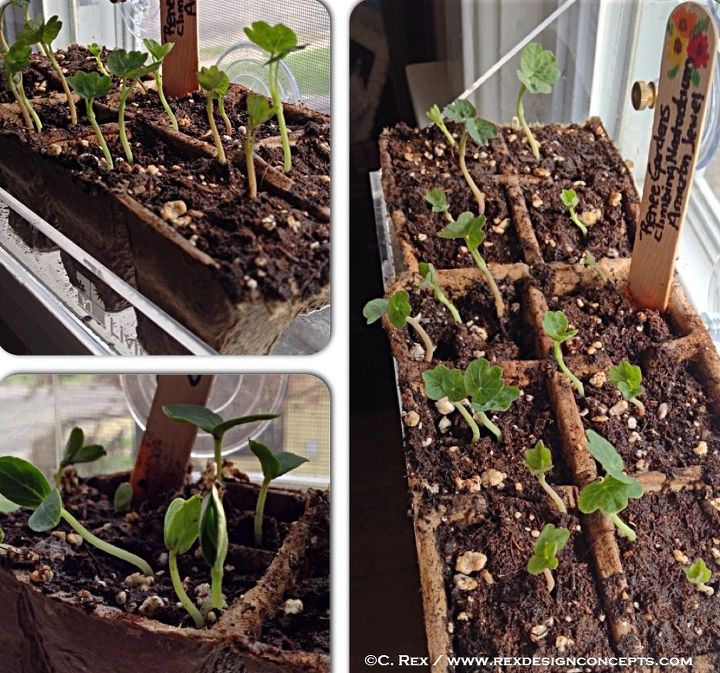 the best seed starting tips ever, container gardening, gardening