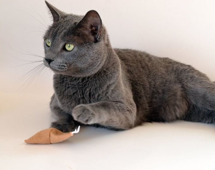 catnip filled felt fortune cookie cat toys, crafts, pets, pets animals
