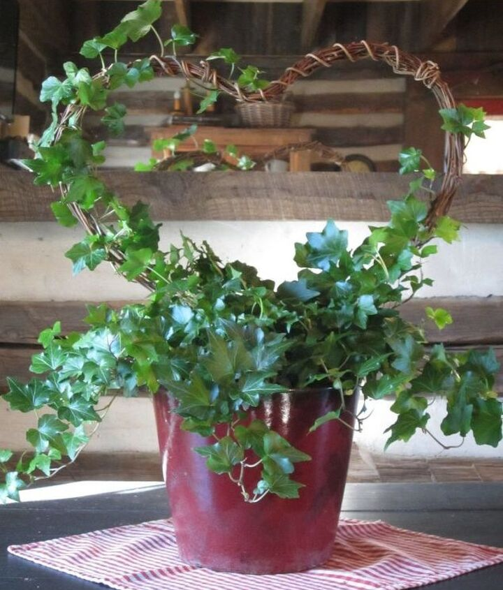 rustic valentines heart shaped topiary, container gardening, diy, gardening, valentines day ideas