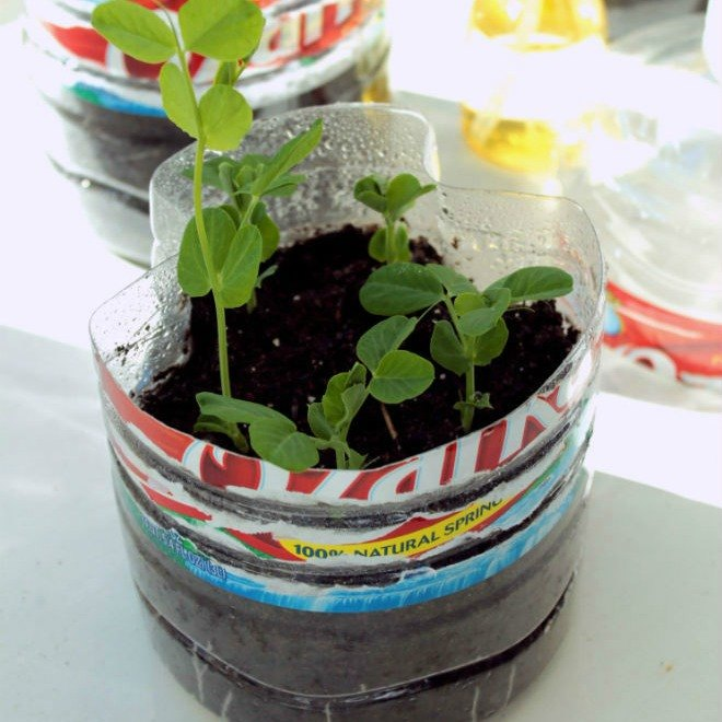s 13 surprising shortcuts to starting seeds in doors, gardening, Make a mini greenhouse from a water bottle