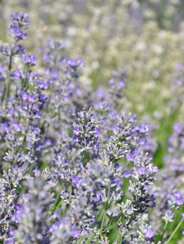 how to make a lavender sachets, crafts, gardening, how to