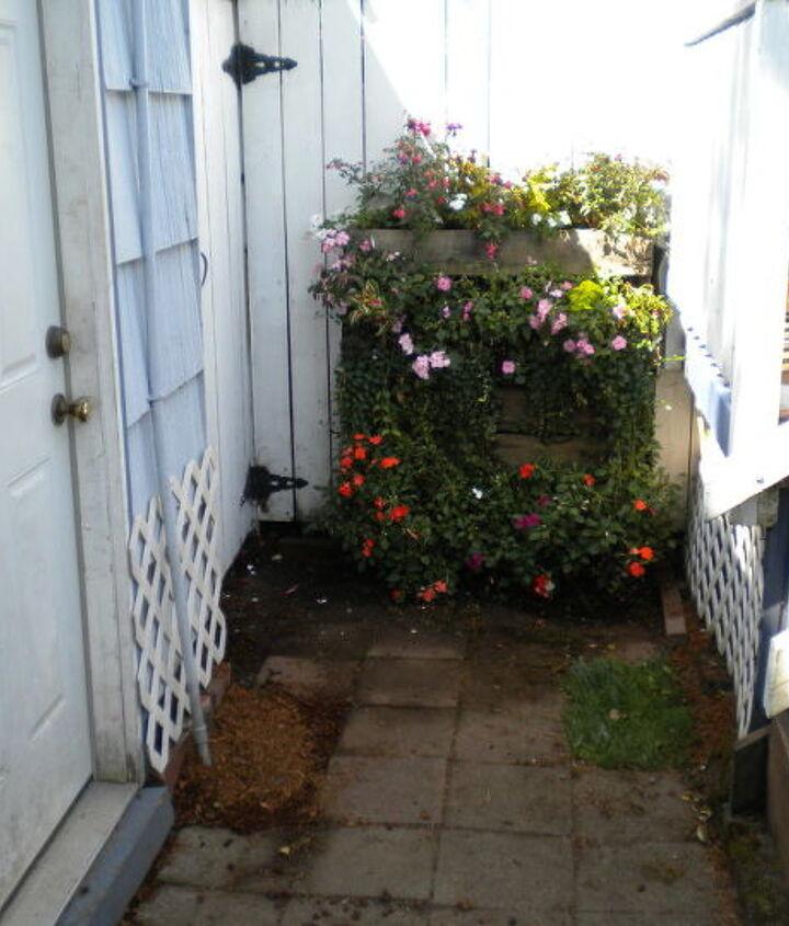 My pallet garden