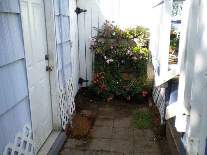 my backyard garden, flowers, gardening, outdoor living, My pallet garden