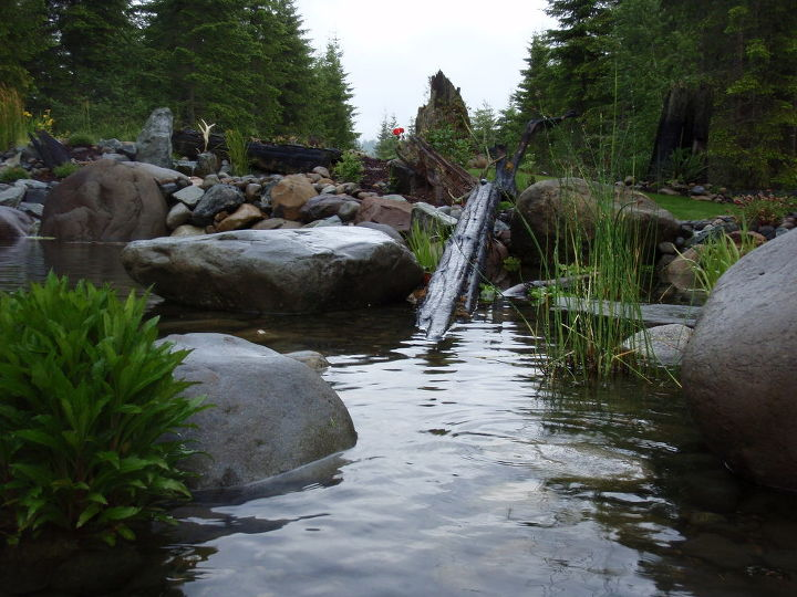 customer photo story, outdoor living, pets animals, ponds water features, Rex s Swim Pond