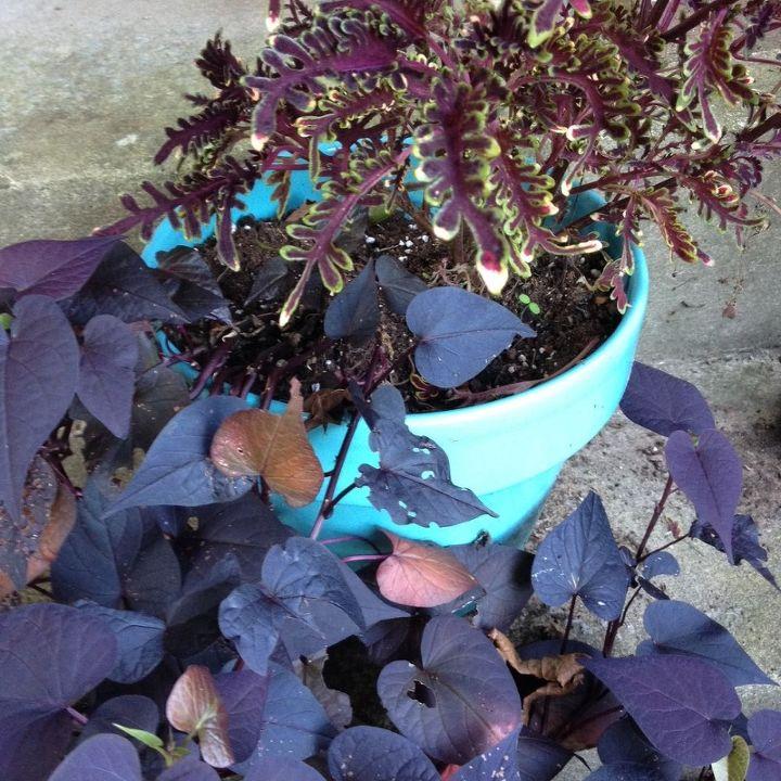 transforming garden porch summer to fall, flowers, gardening, porches, seasonal holiday decor