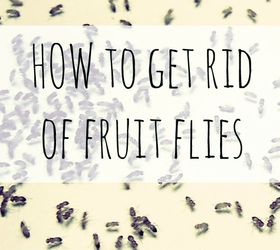 How To Get Rid Of Fruit Flies With Household Items
