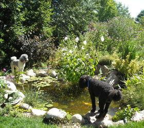 Water Gardening Ponds Water Features Waterfalls Koi Ponds Outdoor  Lifestyles, Gardening, Outdoor Living,