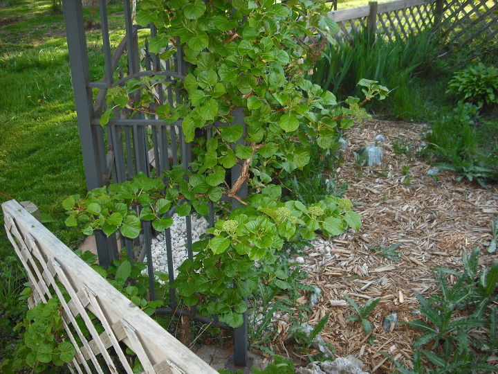 garden and pond from old home digging all up to take to new home, crafts, flowers, gardening, hibiscus, ponds water features