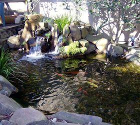 Pond Makeover for Lisa's Small Courtyard Garden in Houston