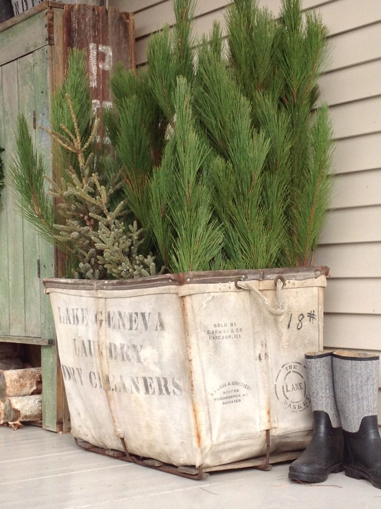 use what ya have, gardening, repurposing upcycling, I unearthed this fabulous laundry cart from my shed full of stash plunged a LOT of spruce tops in for a vignette on my front porch