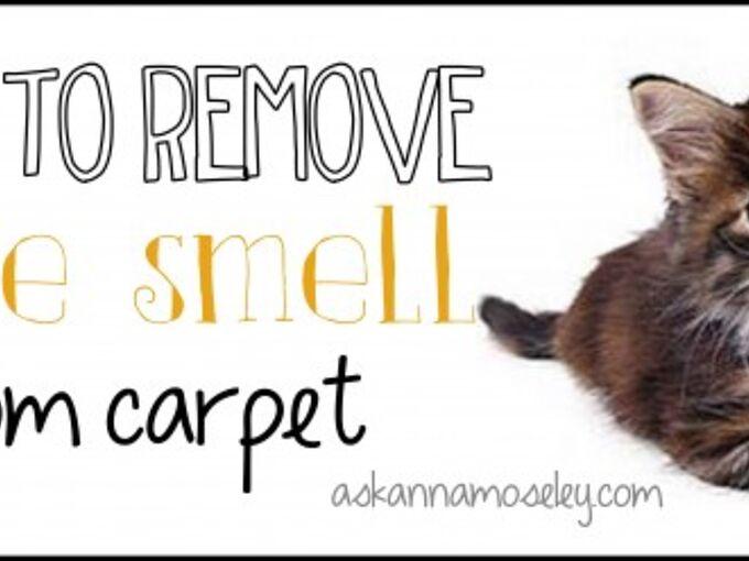 Pet Urine Removal Hometalk