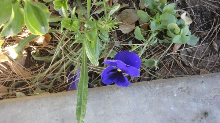 spring izzz springing, flowers, gardening