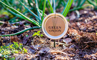 how to make mason jar lid plant label, crafts, gardening, mason jars, repurposing upcycling