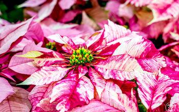 How To Keep Holiday Houseplants Alive