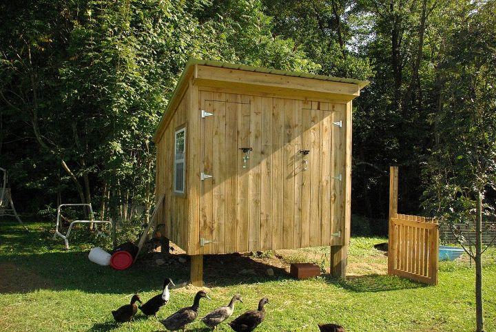 duck coop, pets animals