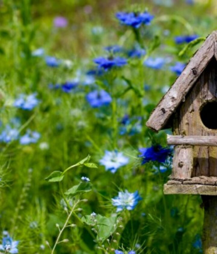Bright colored flowers attract some species of birds and having a house mixed among the taller colorful flower bed will ensure a beautiful view for your new feathered friends.