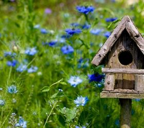 Nice Placing Birdhouses In The Garden, Flowers, Gardening, Bright Colored  Flowers Attract Some Species