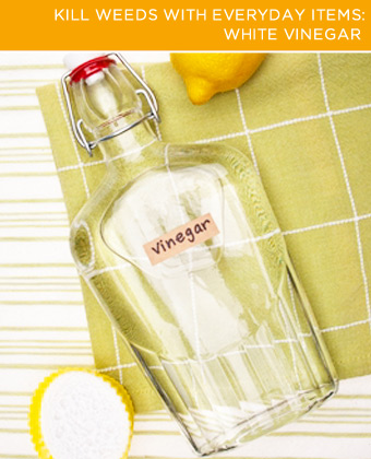 White Vinegar. White vinegar is dirt cheap (about five cents per ounce) and an effective weed killer, plus you probably already have some in your home!