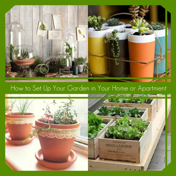 How to Set Up Your Garden in Your Home or Apartment | Hometalk