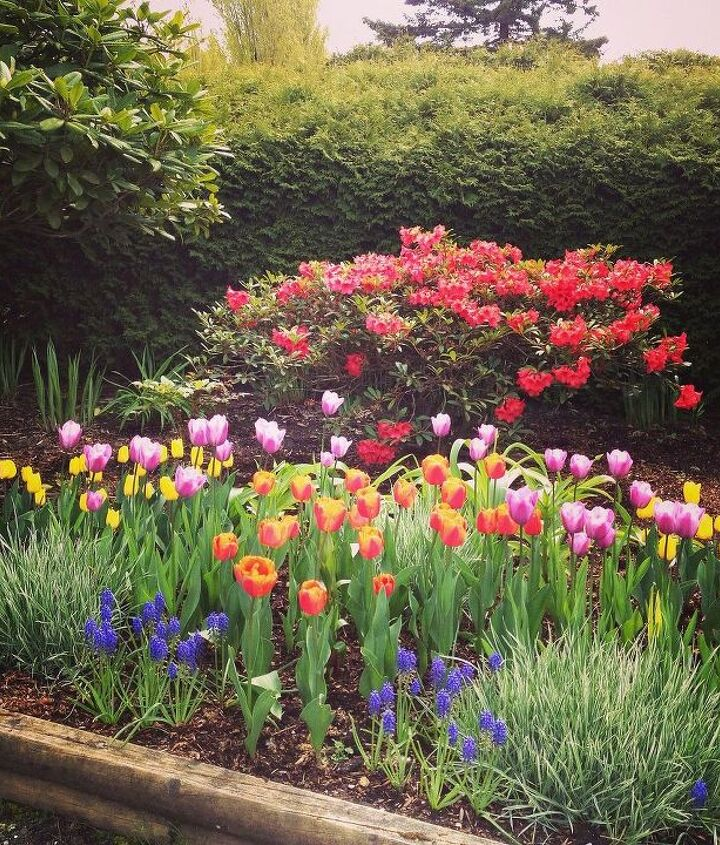 Should the pink tulips stay or go?