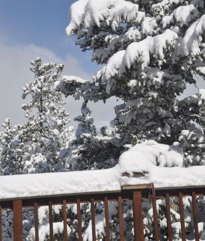 My deck this morning