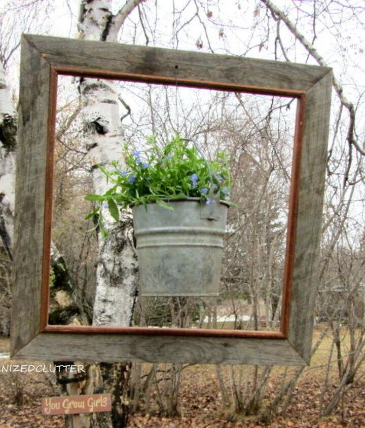 framed lobelia bucket, gardening