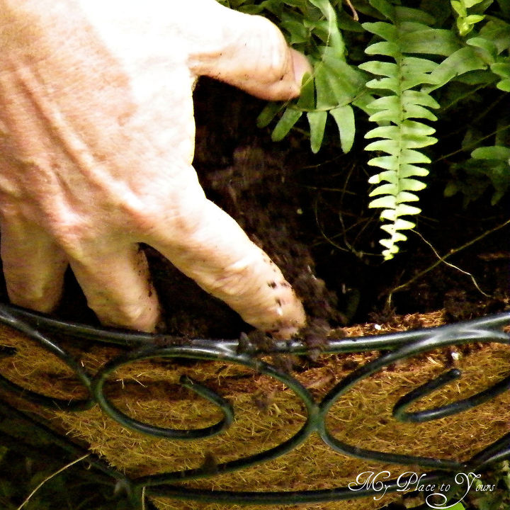 how to have hanging ferns that are the envy of the neighborhood, flowers, gardening, I prefer to use coir lined wire baskets