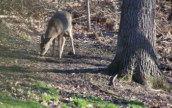 Keeping Away Deer !