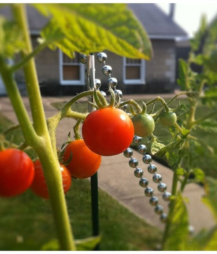Don't leave your tomatoes hanging around defenseless. Plant a few of these great companions to help your veggies fend off insects.