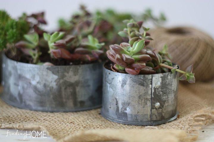 plumbing material succulent garden, flowers, gardening, repurposing upcycling, succulents