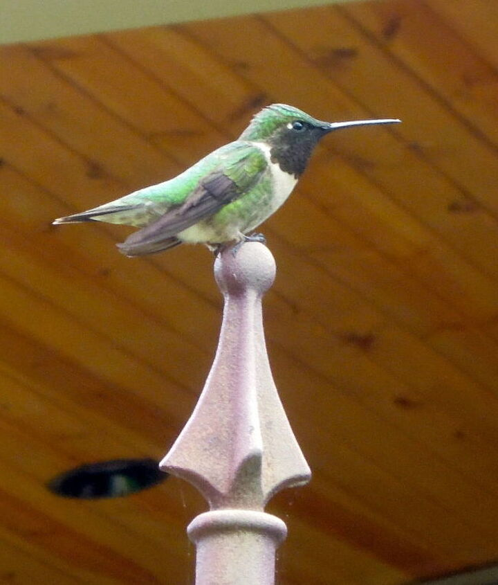 Critters,bugs & birds around our yard First hummingbird of the season