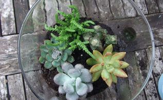diy succulent terrariums, crafts, flowers, gardening, succulents, terrarium, succulent terrariums are easy to make and keep