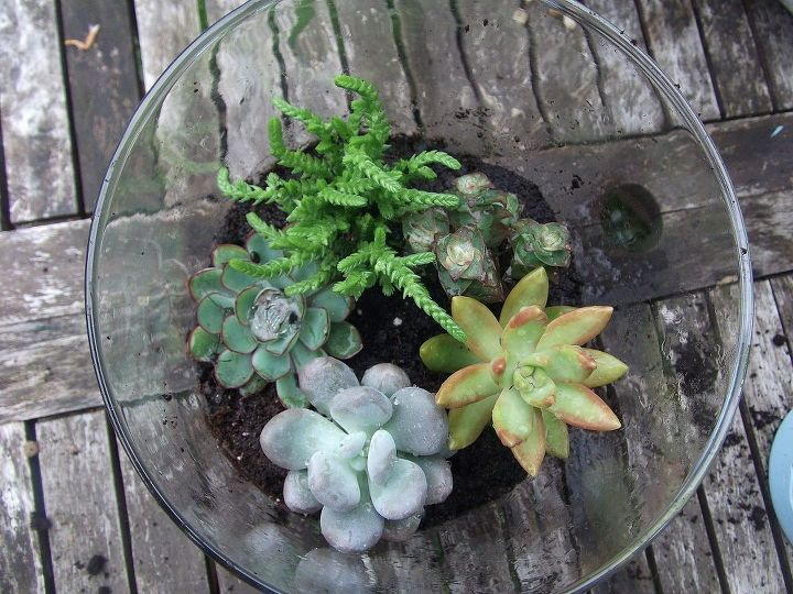 succulent terrariums are  easy to make and keep