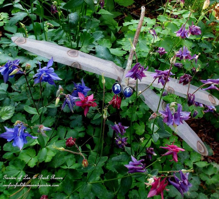 Dragonfly in the columbine