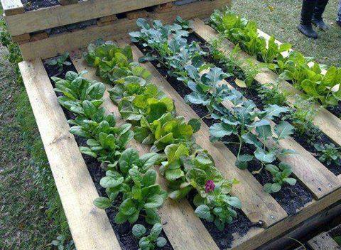 Q Pallet As A Garden Bed Container Gardening Repurposing Upcycling