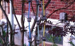 recycled soda bottles as hanging seedling rain chains, crafts, outdoor living, repurposing upcycling, This is all 5 of the rain chains hanging together in my Japanese Maple tree They are hung on a white plastic clothes hanger