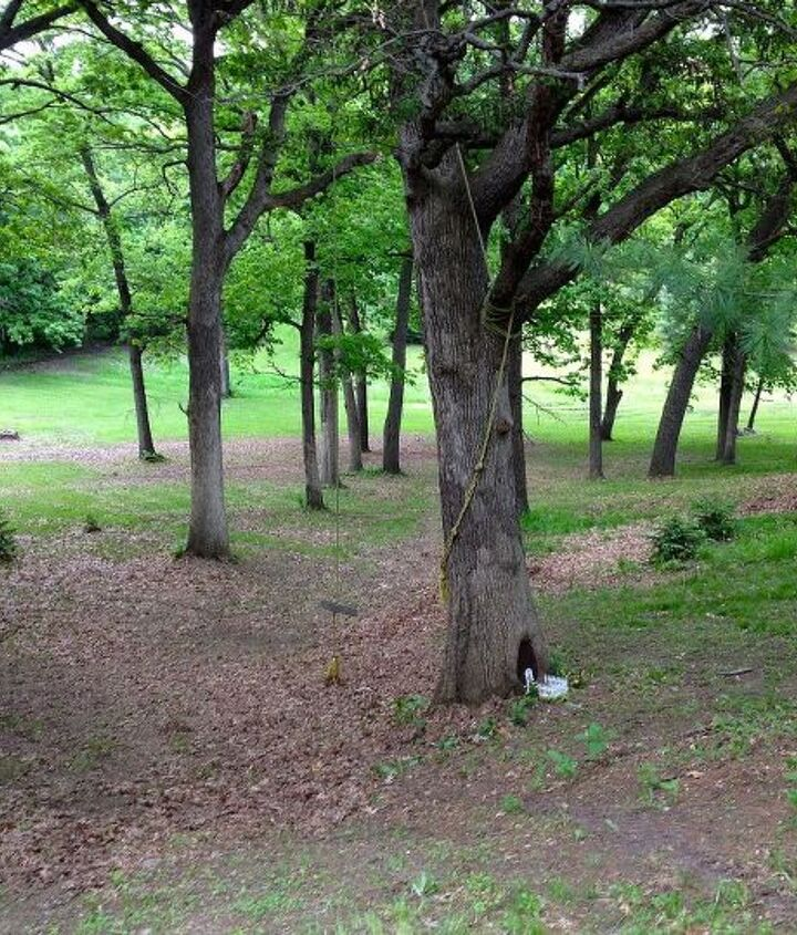 This is a wooded area on my property that my grandkids call the Fairy Woods. One of the old Oak Trees has a large hole near the base of the tree. I had an idea...Fairy House in the tree.