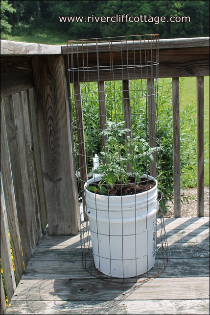 growing tomatoes in five gallon buckets, gardening, You can usually find someone to give you a five gallon bucket or you can buy one for about 2 50 Lowe s Drill 4 5 holes on the bottom for drainage Add some compost soil that drains well followed by your tomato plant